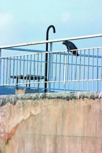 3a Socratis Socratous parrot150