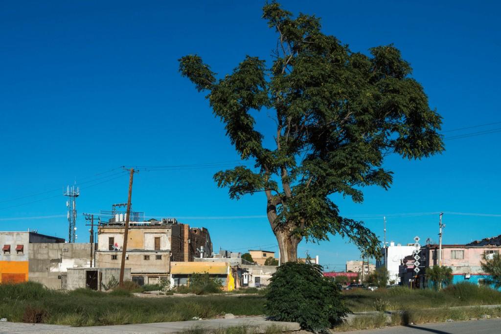 ca2m teresa margolles el testigo 2010.2